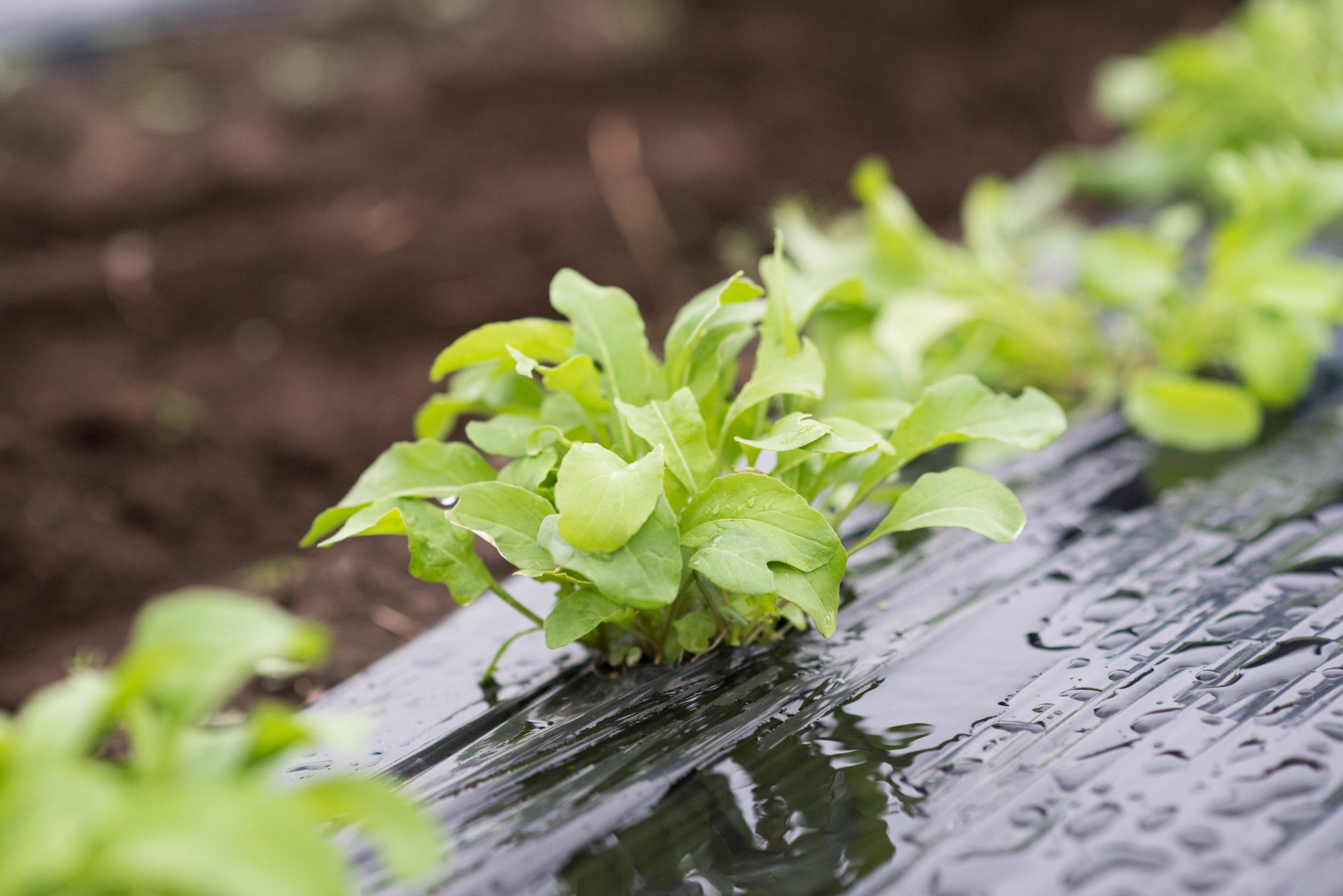 無農薬&無肥料栽培